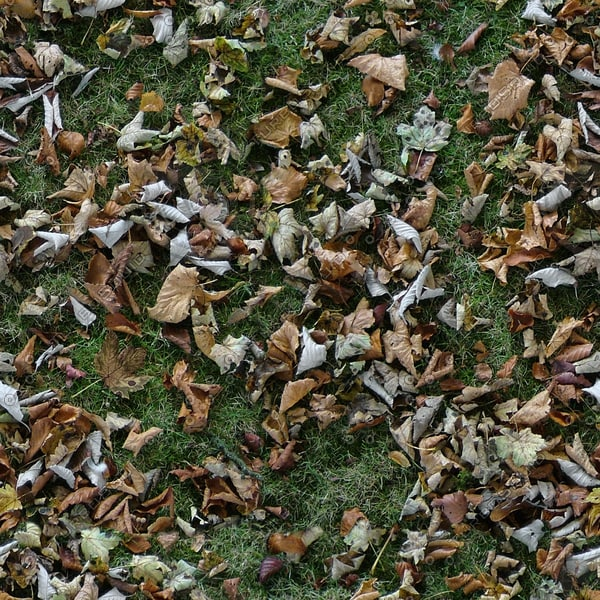 G362 grass leaves fall texture