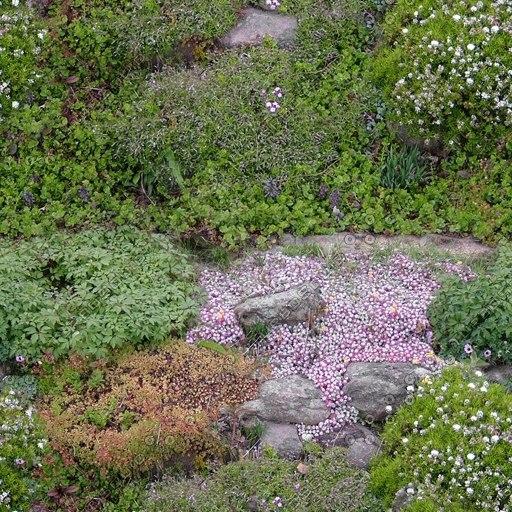 G207 garden rockery flowers