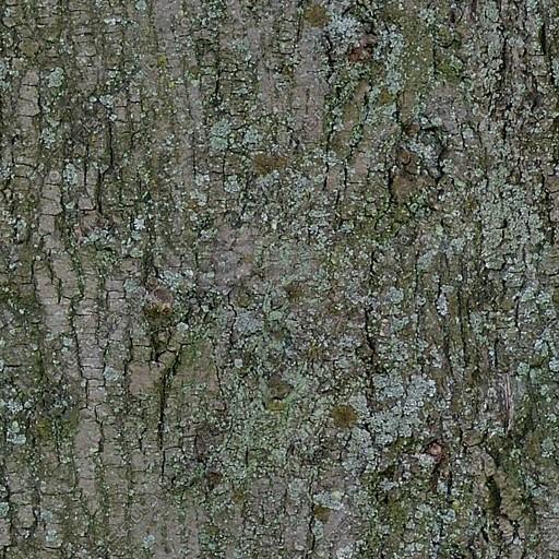 Bark011.jpg