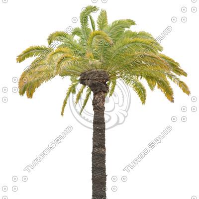 Palm_40.tga