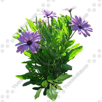 Flower_H_16.tga