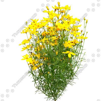 Flowers_N_06.tga