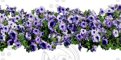 Flower_35_01.jpg