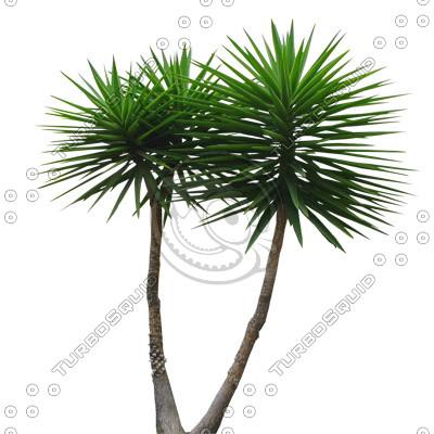 Palm_03.tga