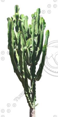 Desert_plants_19.tga