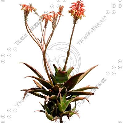 Desert_plants_26.tga