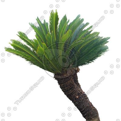 Palm_N_05_01.jpg