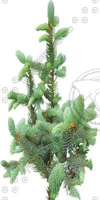 TreeL_pine_04.tga