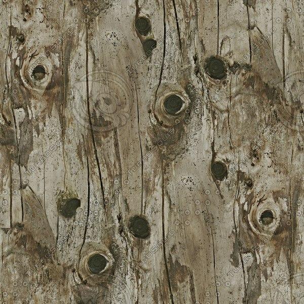 BRK028 dead tree bark