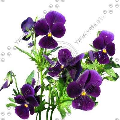 Flower_L_14_01.jpg