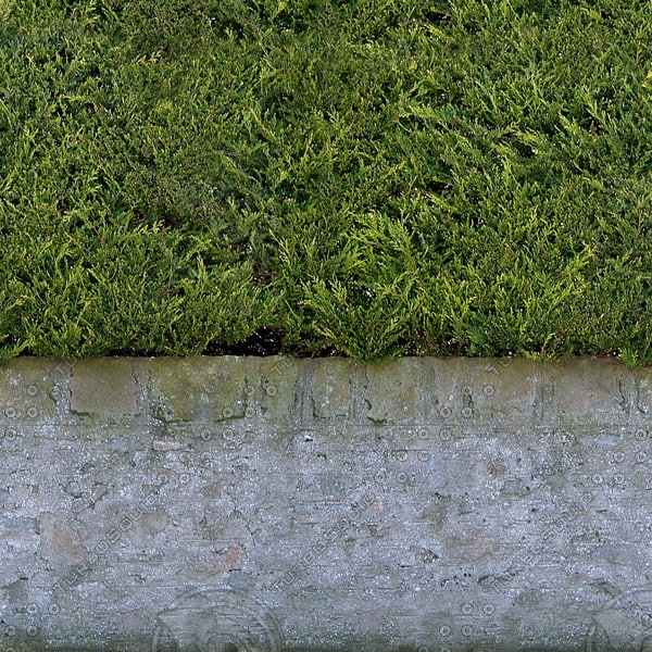 H004 garden hedge wall texture