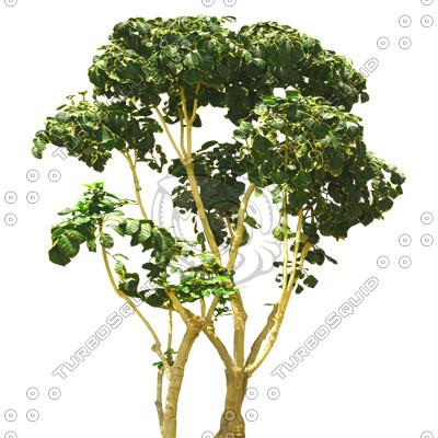 Tree_tropic_06.tga