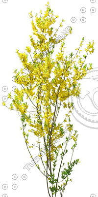 BushL_yellow_12_01.jpg