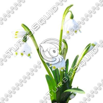 Flower_N_29.tga