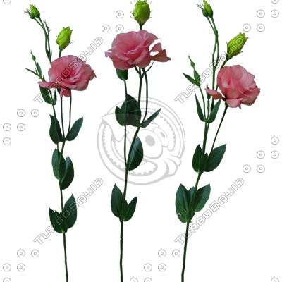 Flower_V_01.tga
