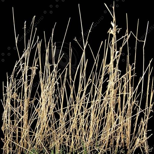 PLNT018 reeds long grass texture