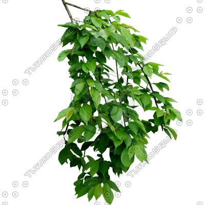 Branch_S_38_01.jpg