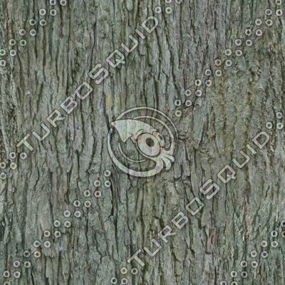 Tileable tree bark texture with normal map