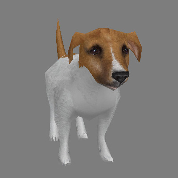 max jack russell terrier