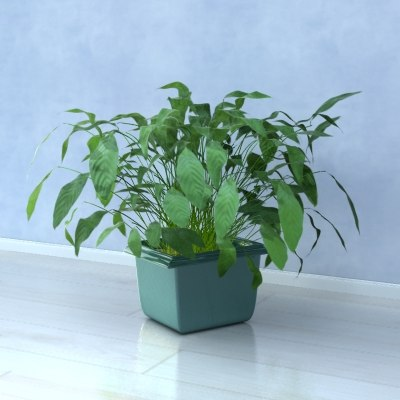 realistic house plant 3d max