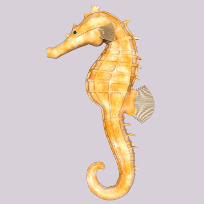 Seahorseyellownatural_Rev00002.tga