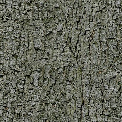 Bark003.jpg