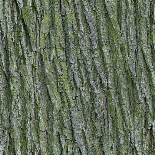 Bark004.jpg