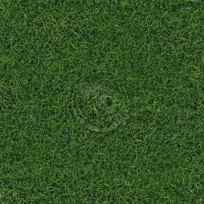G066 grass garden lawn texture