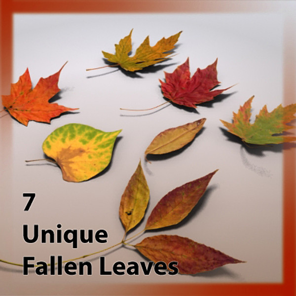 fallen autumn leaves leaf 3d max - Autumn Leaf Fallen Fall Leaves... by Braden Lehman