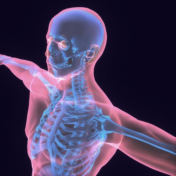 human body male 3d model