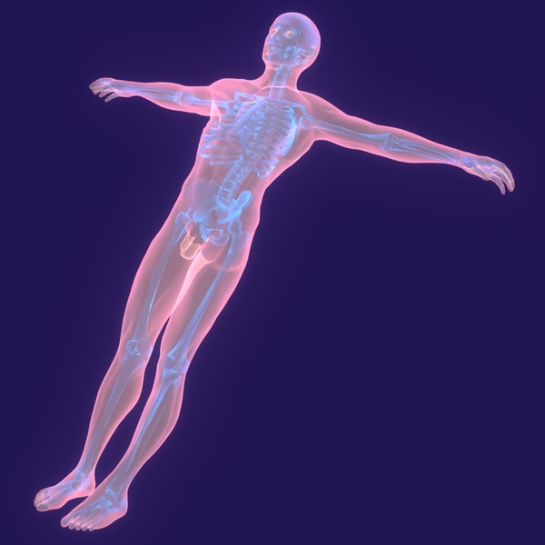 human body male 3d model - Human Body (Male)... by PROTOCG
