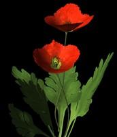 Red Corn Poppy.obj.zip
