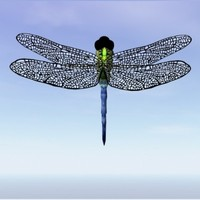 Dragonfly.3ds.zip