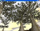 trees bark leaf 3d model