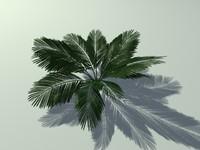 3d fern palm tree model