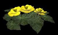 Begonia Yellow max.zip