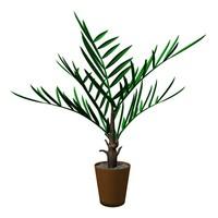 phoenix palm 3ds
