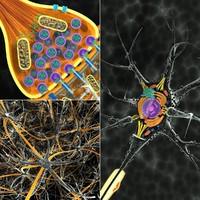 Neuron Cell Collection