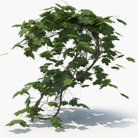 Ivy Plant (01)