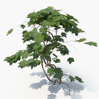Ivy Plant (04)