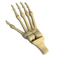 animal foot bones 3D