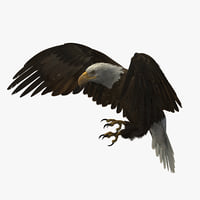 3D american bald eagle rigged model