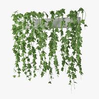 ivy in pot 03