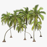 3D rigged coconut palm trees model