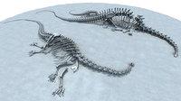 Diplodocus Bones