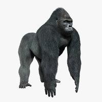 3d obj gorilla silverback