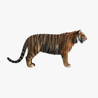 3d tiger shave haircut