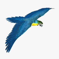 parrot blue macaw 3d model