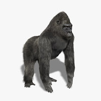 gorilla silverback fur 3 3d model