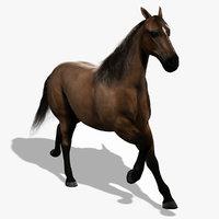 maya realistic horse animation